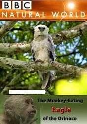 Loài Đại Bàng Ăn Thịt Khỉ ở Orinoco